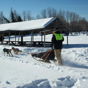 white oak society, dog sled race, white oak classic, deer river mn