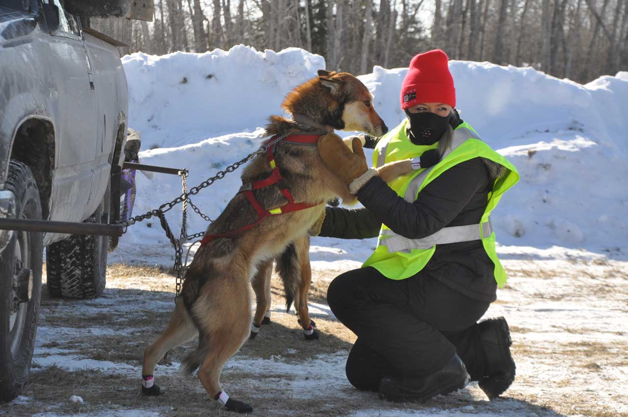 dog handler, white oak dog sled race