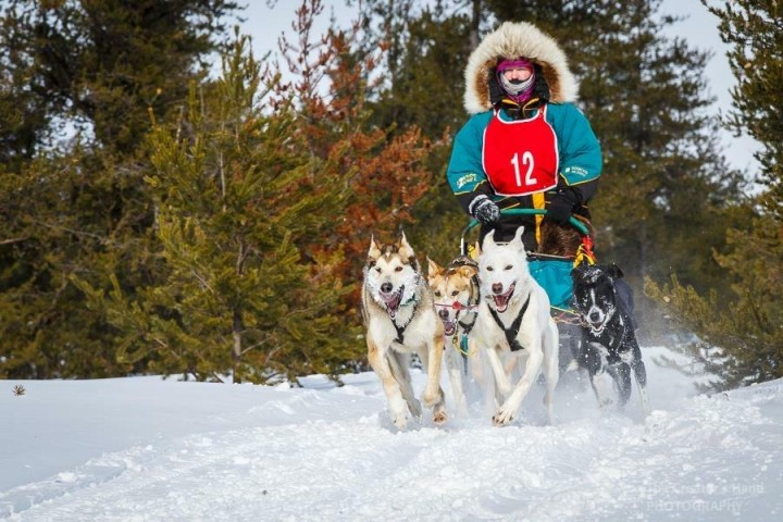 musher, white oak dog sled race