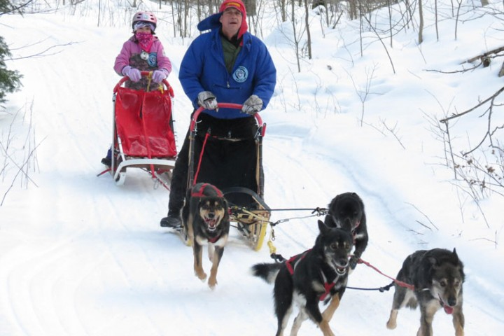 musher, white oak dog sled race, minnesota